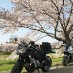 こだま千本桜までツーリング(本庄児玉 ohana)
